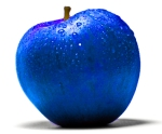 blue-apple4